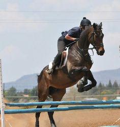 Baikalt and Kerri Horses, Animals, Animales, Animaux, Horse, Animal Memes, Animal, Animais, Dieren