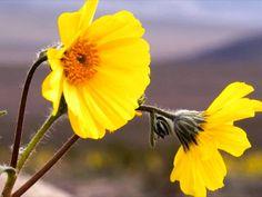 Death Valley's 'Superbloom' a Reminder of God's Majesty