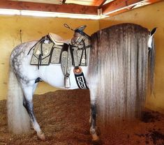 That is an incredible mane! Horse Mane, Andalusian Horse, Most Beautiful Horses, Pretty Horses, Spirit Der Wilde Mustang, Beautiful Creatures, Animals Beautiful, Animals And Pets, Cute Animals