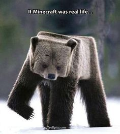 Funny pictures about If Minecraft was real. Oh, and cool pics about If Minecraft was real. Also, If Minecraft was real. 9gag Funny, Funny Memes, Hilarious, Funniest Memes, Photomontage, Humor Minecraft, Minecraft Stuff, Minecraft Quotes, Minecraft Quilt