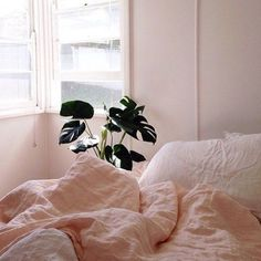 Warm and cozy bedroom plants aesthetics hipsters Tumblr Instagram bedroom decor ideas inspiration