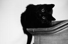 Help! De kat krabt alle meubels kapot! No worries, wij weten precies wat je daartegen kan doen. Deze tips houden je meubels en kat tevreden.