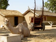 Saharia Organic Resort, Rajasthan, India. An 18 hectare farm in the village of Maheshpura, 25km from Jaipur  http://www.organicholidays.co.uk/at/1333.htm