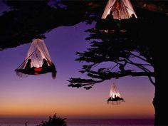 Tree Camping, Elk, California