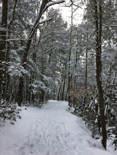 Winter on the Sugarland Trail in the Smoky Mountain national park.