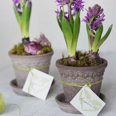 Terrain A Spring Blooming Gift #shopterrain