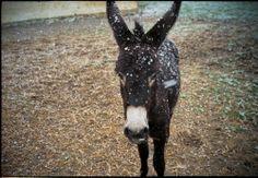 Meet Lola, the resident donkey