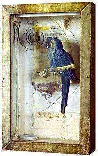 Joseph Cornell Parrot Boxes