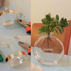 Turn a empty perfume bottle in a cute flower glass.