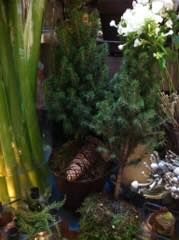 vanne Plants, Plant, Planets