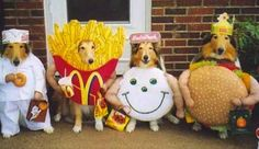 LMAO! halloween costumes for dogs.