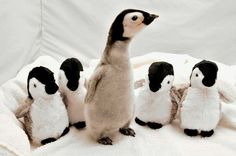 One of these penguins is not like the others...(Mike Aguilerra/Sea World via Getty Images)