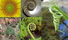 spirals in nature Spirals In Nature, Beautiful Wall, Natural World, Fractals, Mystic, Natural Beauty, Cool Stuff, Flowers, Trees