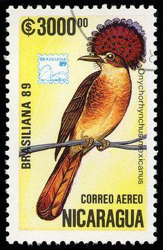 Onychorhynchus coronatus mexicanus. 3rd Brasiliana exhibitions 1989. Postage stamp from Nicaragua, circa 1989