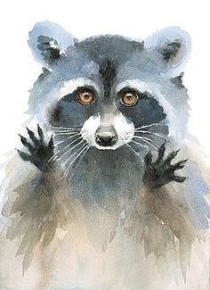 Watercolor Raccoon Begging Look Hand Painted Illustration on white background Royalty free image illustration Fuchs Illustration, Watercolor Illustration, Watercolor Paintings, Original Paintings, Watercolors, Raccoon Drawing, Raccoon Art, Animal Paintings, Animal Drawings
