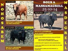 torodigital: PROGRAMACION BOUS A MASSAMAGRELL 25-10-14