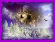Wolf Frame