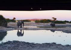 Photo Competition, Big 5, Photo Contest, Safari, Sky, Elephants, Pictures, Magic, Animals