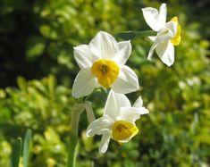 Como cuidar das flores no inverno. Durante os meses mais frios do ano as flores que se encontram no jardim, terraço ou varanda da nossa casa dificilmente podem ignorar as mudanças de temperatura, por isso é importante protegê-las para ...