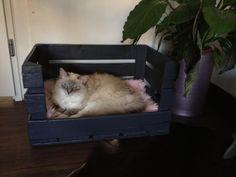DIY cat/dog basket: made an old wooden crate into a cat/dog basket