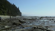 Low tide  Low tide on the tidal flats, a perfect time for beach hiking on the West Coast. (Jonah Flicker)
