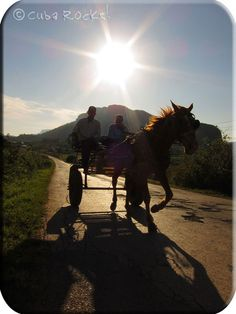 Helping you Discover the REAL Cuba!  Find out more at www.cubarocks.co.uk Vinales, Cuba, Rio, Horses, Animals, Animales, Animaux, Animais, Horse