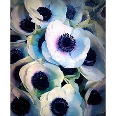 Anémones   #paris #flower #marchédesenfantsrouges #paris3 #anemones #inspiration #colors #spring #idea #aqua #Paris #flowers  by noemieferre