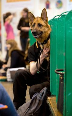 Ilusão de ótica deixa jovem com cabeça de cachorro na Inglaterra +http://brml.co/1x0184S