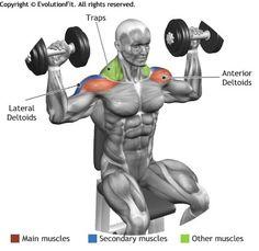 SHOULDERS - SEATED DUMBBELL PRESS