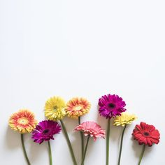 New ideas wallpaper flores coloridas Flower Background Wallpaper, Flower Backgrounds, Wallpaper Backgrounds, Iphone Wallpaper, Vector Background, Art Floral, Colorful Flowers, Beautiful Flowers, Floral Flowers