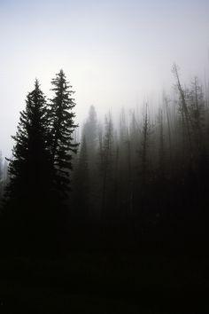 moody-nature:  Fog in Manti La Sal park, Utah | By Zachary Massengill