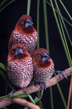 ~~ They are completely asleep, oblivious to the person who's taking their pictures! Now they're pinned dozens of times on the internet & they havent got a single clue about it. How funny & sweet are these pretty little birds! ~~