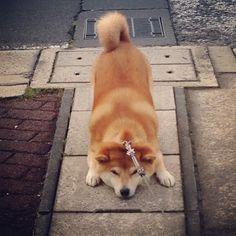 "remblr: "" そっちはイヤ - @kiyo106- #webstagram """