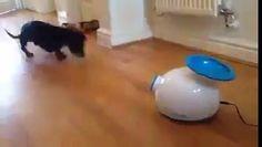 Ve el vídeo «Divertido juguete para perros» subido por CPost - PalFeis a Dailymotion.