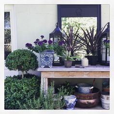 Potting bench display with mirror, collection of pots & boxwood topiary - Maura Endres