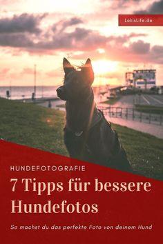 Du möchtest bessere Fotos von deinem Hund machen? Mit diesen Tipps gelingt dir das perfekte Hundefoto ganz leicht. || #LokisLifeBlog #Hundefotografie #Hund Movie Posters, Movies, Fictional Characters, Art, Good Photos, Pictures, Perfect Photo, Animal Rescue, Animals