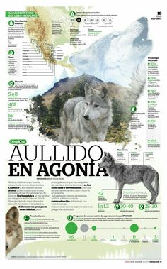 50 amazing new infographics added to our gallery - Visualoop Information Design, Information Graphics, Scientific Poster Design, Site Analysis Architecture, Newspaper Design, All About Animals, Animal Posters, Wildlife Conservation, My Animal