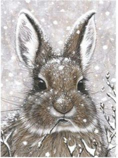 ❧ Illustrations Petits lapins ❧ by Marjolein Bastin. This was my Christmas card a few years ago! Animal Paintings, Animal Drawings, Art Drawings, Easter Drawings, Lapin Art, Marjolein Bastin, Rabbit Art, Rabbit Drawing, Art Et Illustration