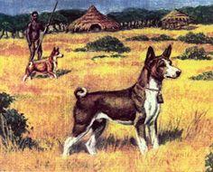 basenjis hunting