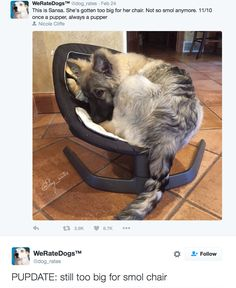 She's gotten too big for her chair. Not so smol anymore. once a pupper always a pupper by weratedogs Cute Funny Animals, Funny Animal Pictures, Cute Baby Animals, Funny Dogs, Animals And Pets, Animal Pics, Dog Pictures, Cute Puppies, Cute Dogs