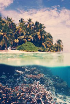 underwater. tropical. palm trees. coral
