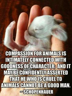 """Compassion for animals is intimately connected with goodness of character; and it may be confidently asserted that he who is cruel to animals cannot be a good man."" - Schopenhauer"