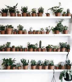 Houseplants can finish a room, especially when cleverly displayed. This show stopping composition adds interest using sculptural shapes, in a mix of sizes. Try creating this simple indoor garden at home using a range of succulents.