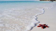 Rejser til Zanzibar Tanzania, Kenya, Villa, Travel, Africa, Viajes, Destinations, Traveling, Trips