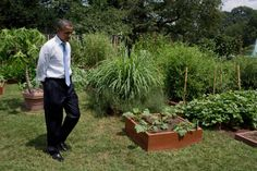 President at White House Kitchen Garden Mr Obama, Barack Obama Family, Black Presidents, Greatest Presidents, American Presidents, Durham, Joe Biden, White House Garden, First Ladies