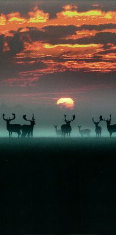 Nature -The Deer Garden, Denmark, Europe.
