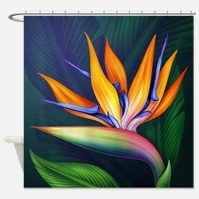 Bird Of Paradise Shower Curtain for Paradise Plant, Birds Of Paradise Flower, Beautiful Flowers Pictures, Flower Pictures, Summer Pictures, Paradise Painting, Exotic Flowers, Exotic Birds, Colorful Birds