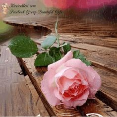 Beautiful Flowers Pictures, Beautiful Flowers Wallpapers, Beautiful Nature Wallpaper, Beautiful Gif, Beautiful Roses, Rose Pictures, Good Morning Coffee Gif, Good Morning Cards, Good Morning Flowers