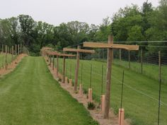 One row completed with cross-arms and wire! Description from bluffstonevineyard.blogspot.com. I searched for this on bing.com/images