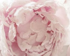Pink flower photography nature photography pink nursery decor